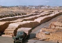 Масштабы воровства приобрели в последние годы фантастический размах из-за фактического отсутствия государственного контроля за вырубками и экспортом древесины
