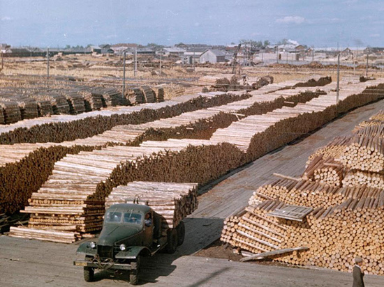 Древесину вывозят в основном в Китай