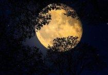 """Ночью жители России смогут увидеть полную луну, которую, по некоторым данным, иногда называют """"жизнерадостным"""" или """"охотничьим"""""""