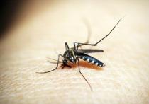 Могут ли комары способствовать распространению COVID-19? Ведь надоедливые насекомые-кровососы давно известны как переносчики ряда опасных заболеваний