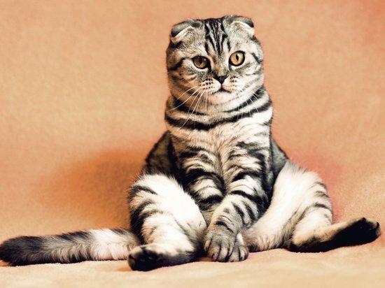 Ученые доказали, что кошки повторяют действия за хозяевами