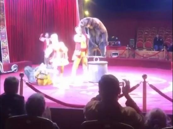 В Подмосковье цирковой медведь напал на мужчину с ребенком