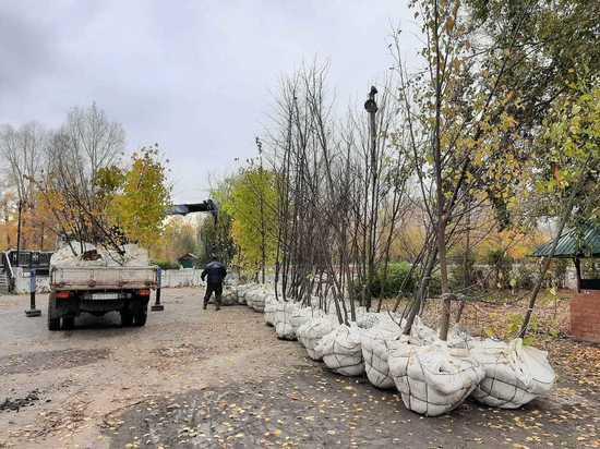 В Барнауле в парке «Изумрудный» начали садить деревья