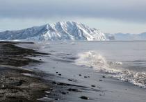 На Халактырском пляже на Камчатке нашли тысячи мертвых морских животных и несколько чаек