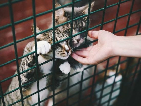 Орловский губернатор поблагодарил участников благотворительной помощи бездомным и больным животным