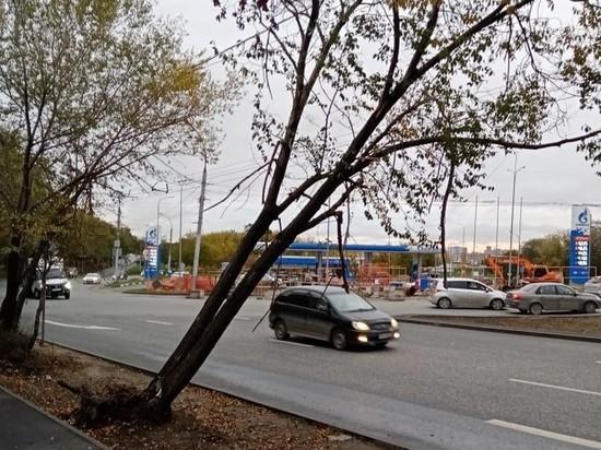 Корни оторваны: аварийные деревья угрожают упасть на дорогу в Новосибирске
