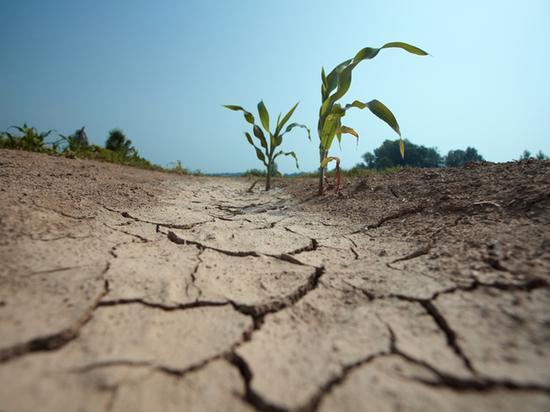 Группа Минсельхоза России оценит в Калмыкии последствия засухи