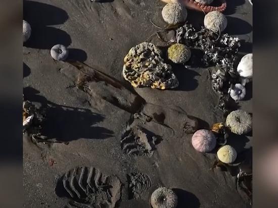 На Камчатке в Авачинской бухте погибли 95% донных животных