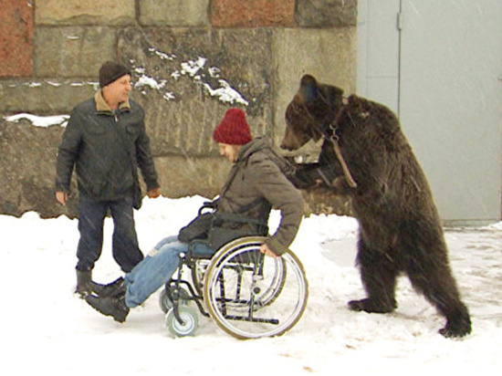 Подробности трагедии в цирке: медведь, убивший уборщика, был звездой Интернета