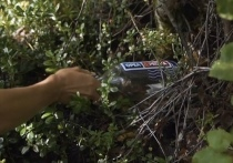 «Полгорода приехало за баксами»: жители Салехарда массово прибыли на поиски бутылки от «Орла и решки»