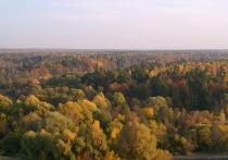 На фоне других российских регионов наш позиционирует себя как лесной край, как земля нетронутой природы