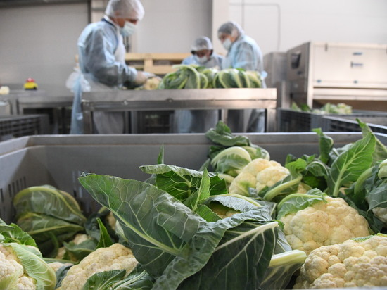 В Волгоградском регионе наращивают объемы переработки овощей