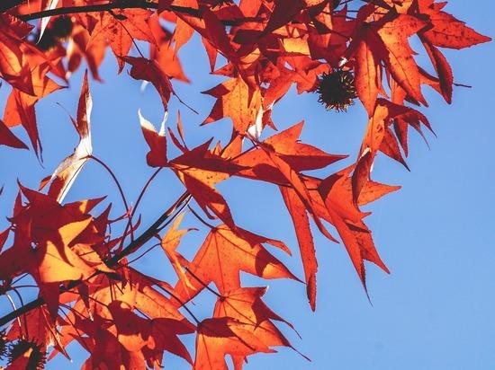 Холодные воздушные массы начнут поступать в столицу только 16 октября