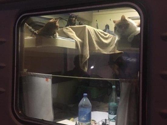 Столичные коты отбыли на курорт в отдельном купе