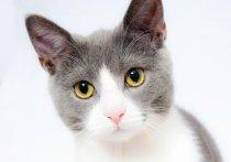 Медлено поморгайте котику, и он вас полюбит