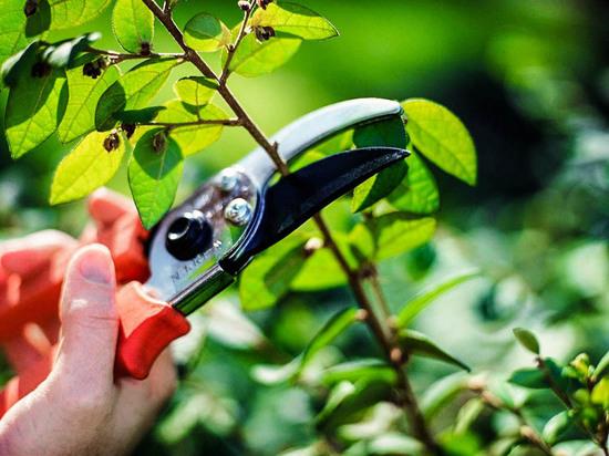 Германия: Когда можно обрезать изгороди и деревья, не навлекая штрафы