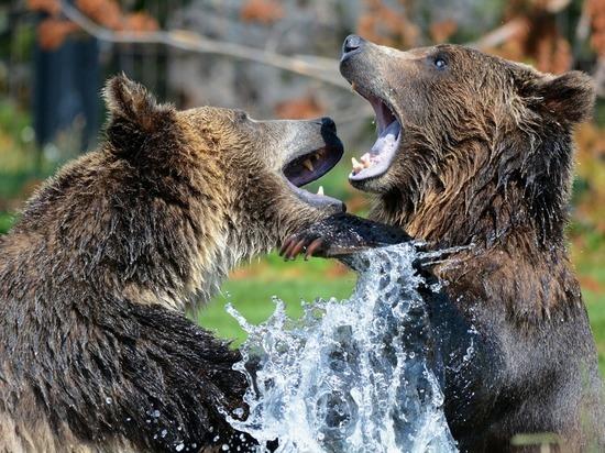 С 1 декабря кировские медведи смогут спать спокойно