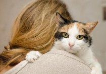 Группа британских ученых, представляющих Сассекский и Портсмутский университеты, получила новые свидетельства в пользу того, что медленное моргание кошки воспринимают примерно так же, как люди – дружелюбную улыбку