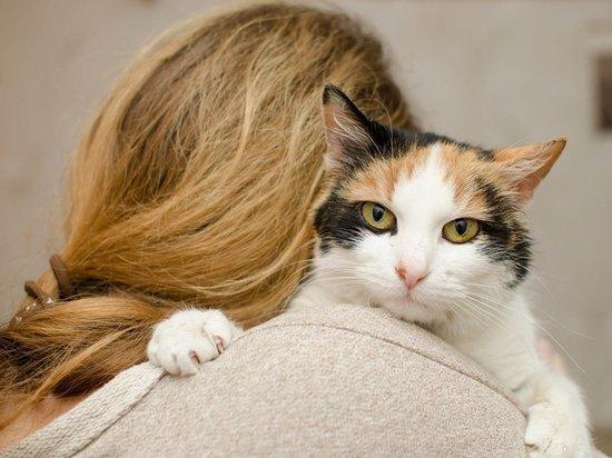 Психологи рассказали, как подружиться с кошкой