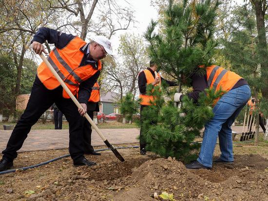 Ставропольский губернатор высадил деревья в сельском сквере