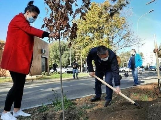 Сотни деревьев и кустарников высадили в Пятигорске на субботнике