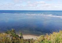 Остров Сахалин — это кладовая нефти и газа, богатой морской фауны