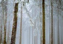 Кузбассовец разгромил дом своего дяди и пропал в лесу