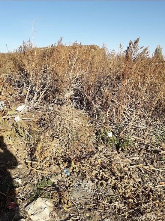 Трупы животных и куча мусора: жители Светлинского района жалуются на беспорядок