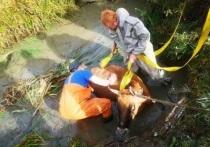 В Ивановской области сотрудники поисково-спасательного отряда вызволили из беды корову