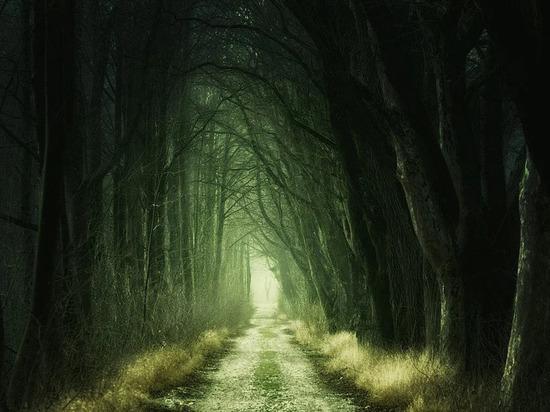 В Ноябрьске мужчина гулял с собакой и нашел в лесу труп