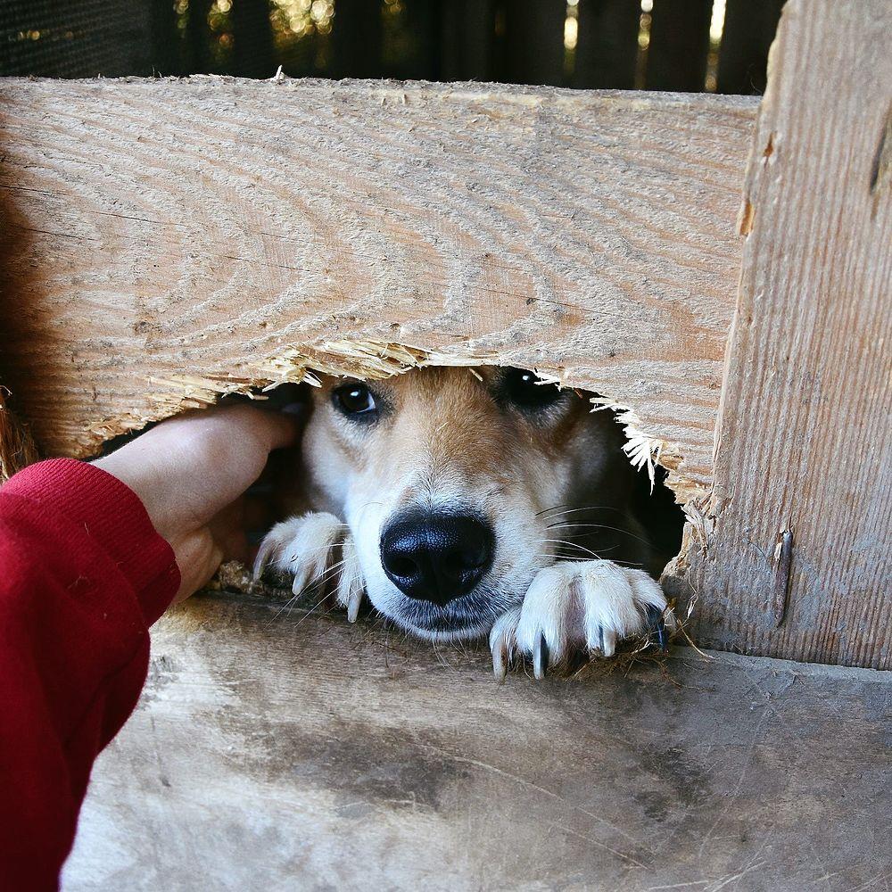Жизнь бездомных животных: фотоистория о тех, кто ждет своего хозяина
