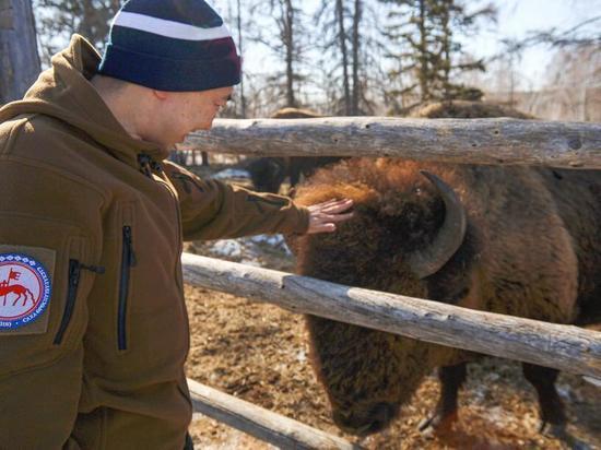 Кемпендяйская соль повышает продуктивность животных Якутии