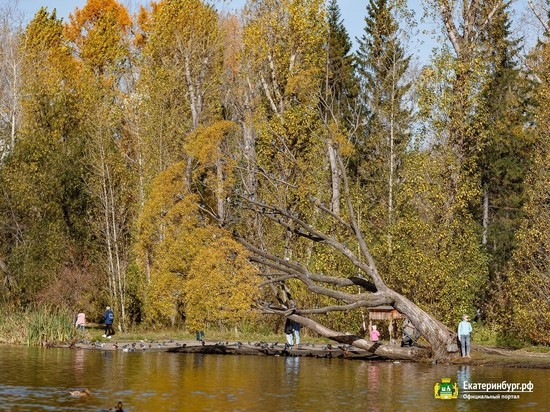 Руководство дендрария на Первомайской в Екатеринбурге рассказало о задаче сохранения растений