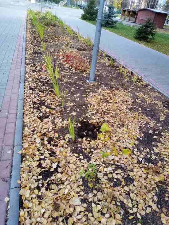 В парке Йошкар-Олы похитили недавно высаженные розы