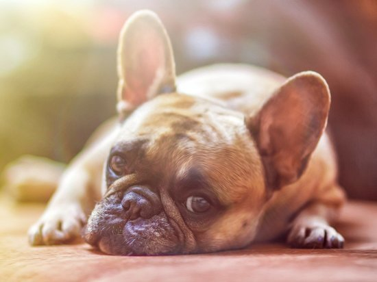 Кировчане продают собак жуликам и покупают сёдла у аферистов