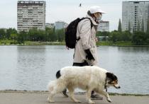 Бежит себе по парку собака, вслед за ней идет метрах в пятидесяти хозяин