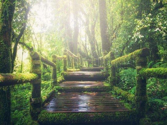 18-летний студент из Яранска пять ночей блуждал в лесу