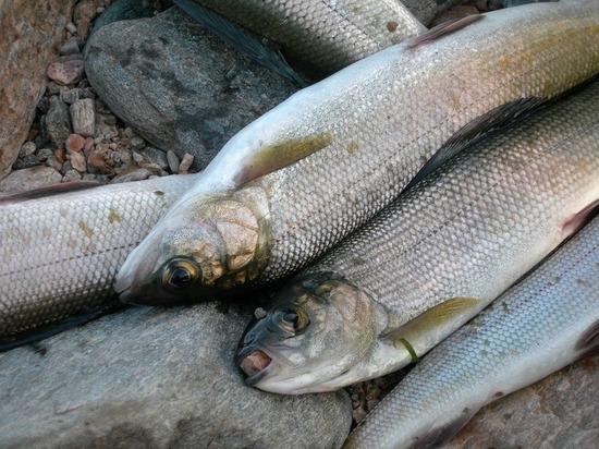 В Бурятии реконструируют два рыбоводных завода