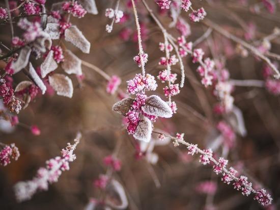 В выходные в Рязанской области ожидаются заморозки