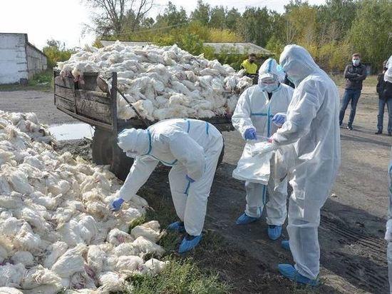 На частном подворье в Мельниково погибли куры и утки