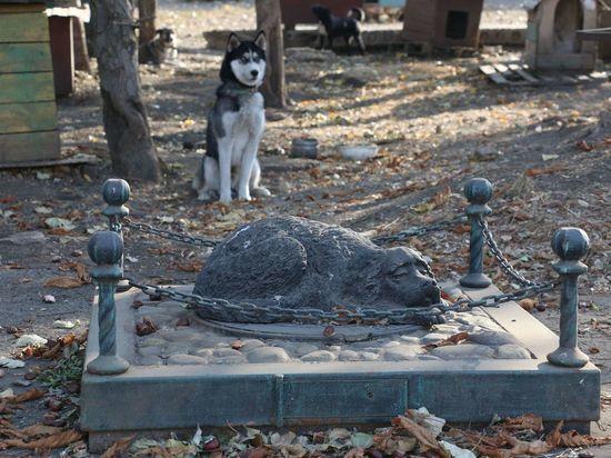 Гранты на поддержку приютов для животных предлагают учредить на Ставрополье