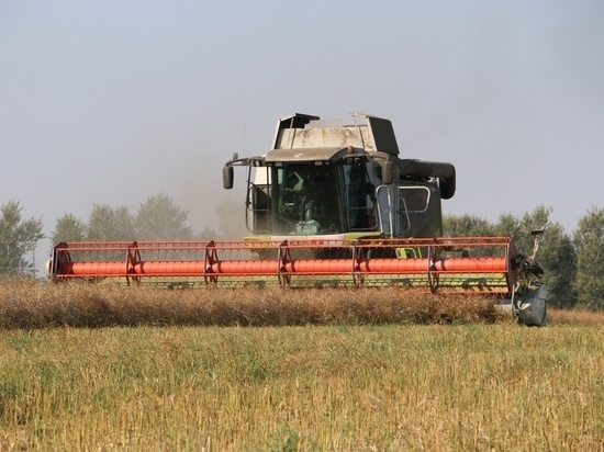 В Ржевском районе собрали хороший урожай картофеля