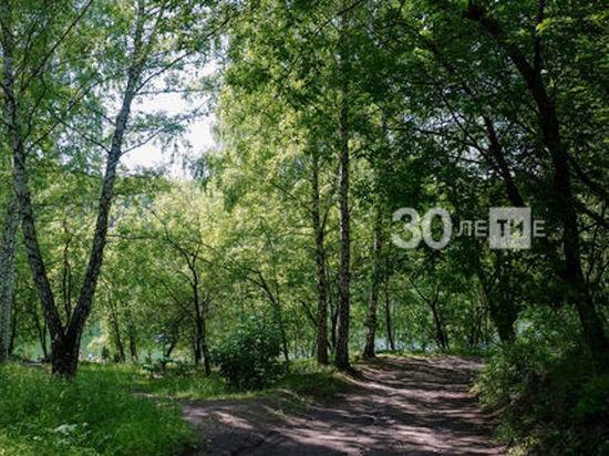 Вдоль новой трассы М12 в Татарстане высадят клоны осин