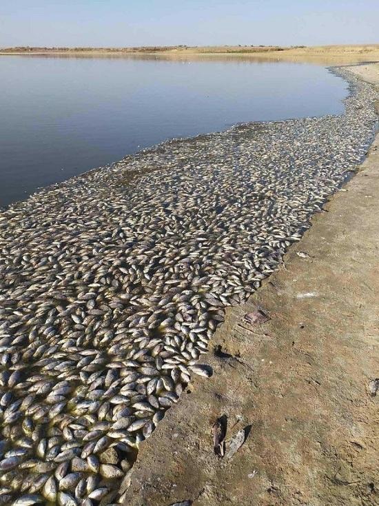 В старейшем водоеме Калмыкии погибла вся рыба