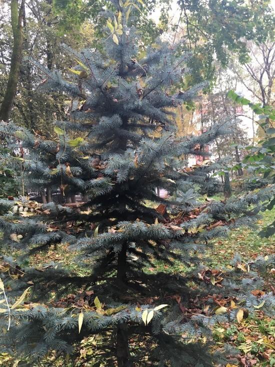 Погода в Смоленске не подарит ни тепла, ни зимы в понедельник