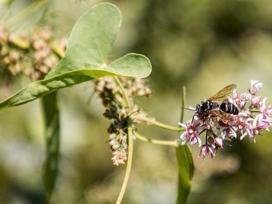 Из яда азиатской осы создали мощный антибиотик