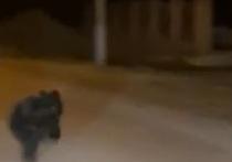 Жители села Скала Колыванского района сняли видео, на котором запечатлен одинокий бегущий медвежонок