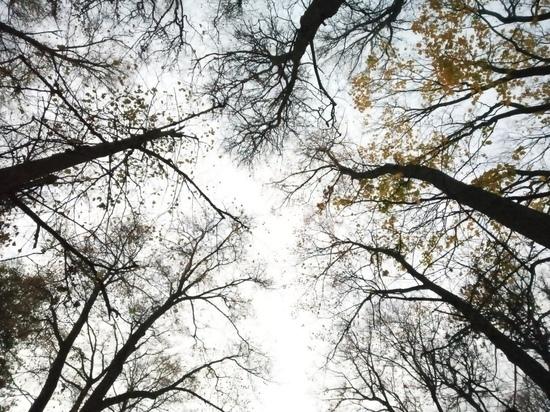 Холодно и ветрено будет в Туле 20 октября