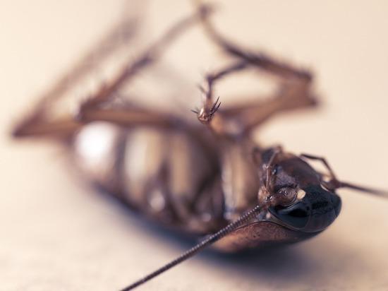 Москвич скончался после травли тараканов в квартире