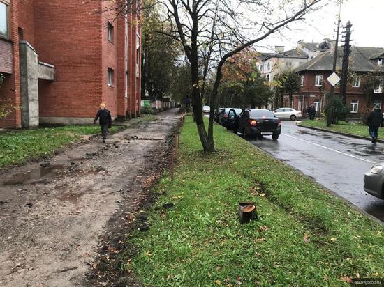 На улице Школьной в Пскове спилили аварийные деревья